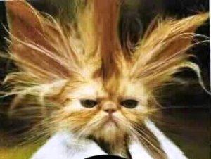 bad-hair_cypressandoak.blogspot.com_