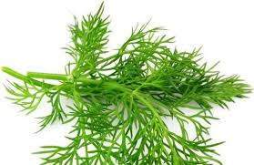 Dill - An A to Z Challenge Post