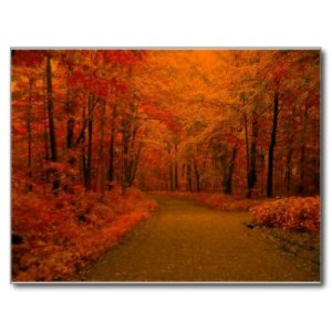Fall Pathway Postcard