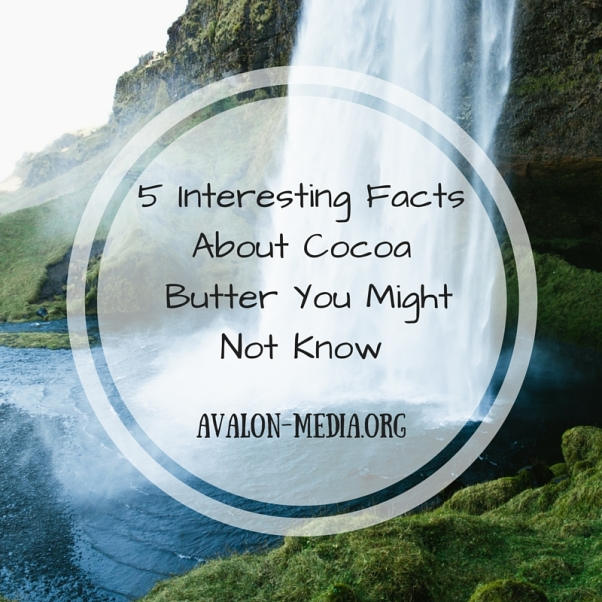 5 Interesting Facts About Cocoa Butter Your Might Not Know (2)